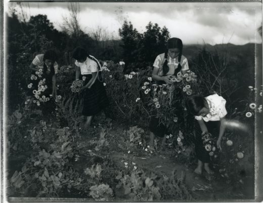 A black and white photograph of four Mexican girls picking wildflowers.